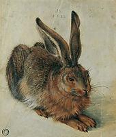 Hare, 1528, durer