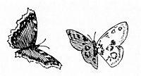 Sommerfugler, kittelsen