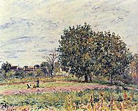 Walnut trees at sunset in early October, c.1882, sisley